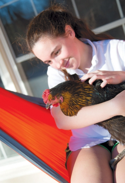 Girl with backyard chicken from Grogg's Green Barn