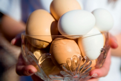 Fresh eggs from backyard chickens
