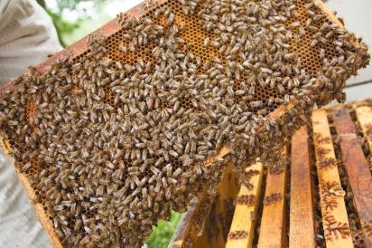 Bee hive of Gold Standard Honey