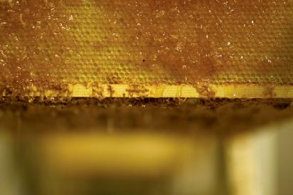 Gold Standard Honeycomb