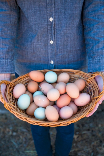 Freshly laid eggs of all colors