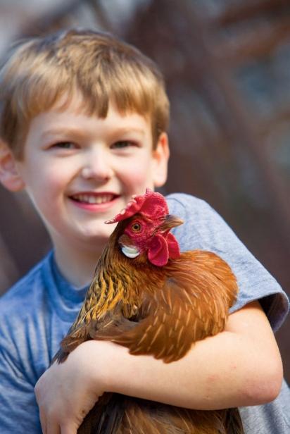 Little boy with chicken